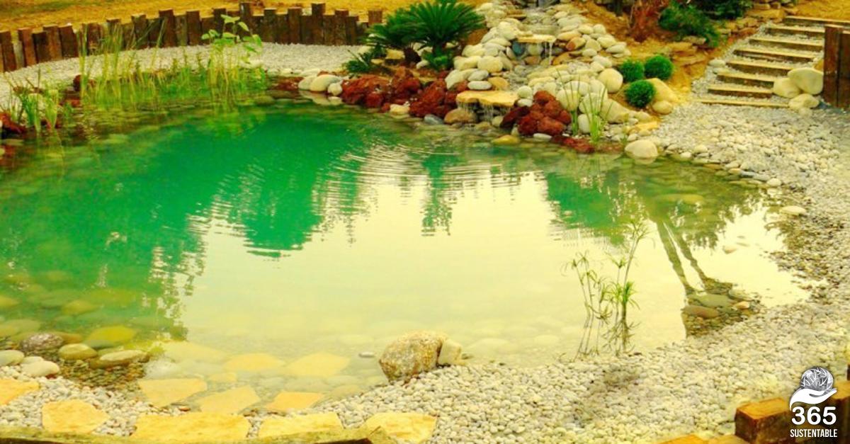 C mo construir una piscina ecol gica paso a paso 365 for Como construir una piscina natural ecologica
