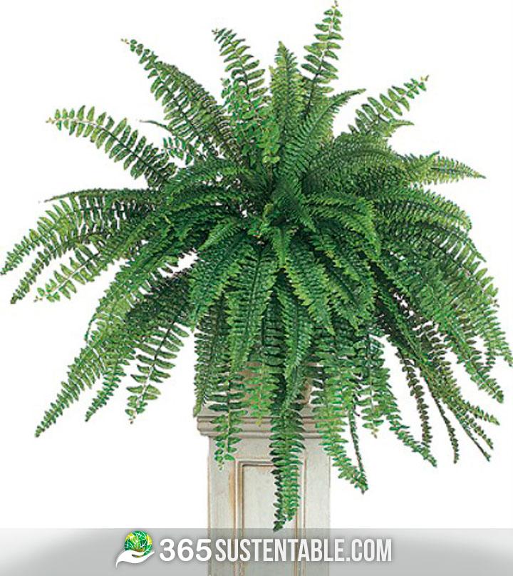 10 plantas purificadoras de aire que recomienda la nasa for Plantas de aire