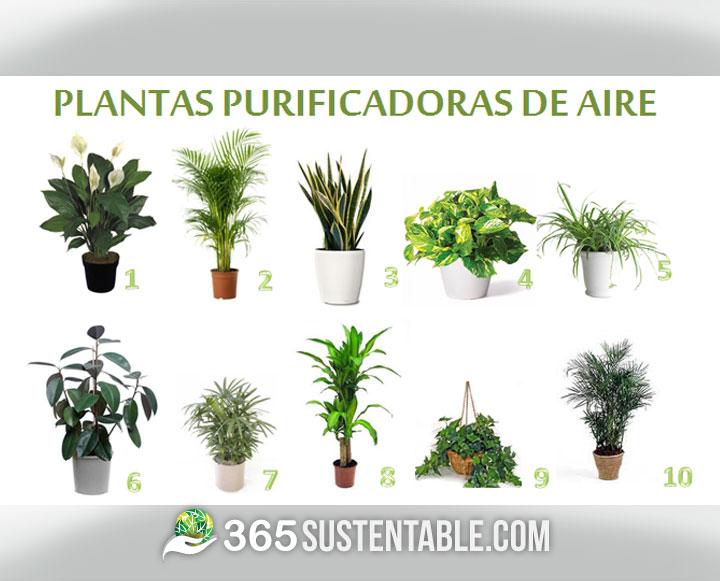 10 plantas purificadoras de aire que recomienda la nasa for Tipos de arboles para plantar en casa